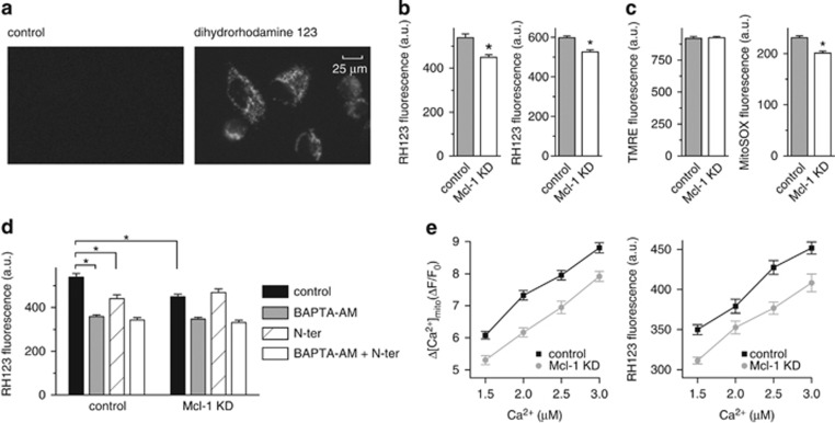 Mcl-1 increases reactive oxygen species (ROS) production in A549 cancer cells by increasing [Ca 2+ ] mito . ( a ) Representative images showing fluorescence signal from A549 cells before and after loading with the ROS indicator dihydrorhodamine 123. ( b ) Summary bar graphs showing the mean±S.E. (300–400 cells, pooled from three independent experiments; * P