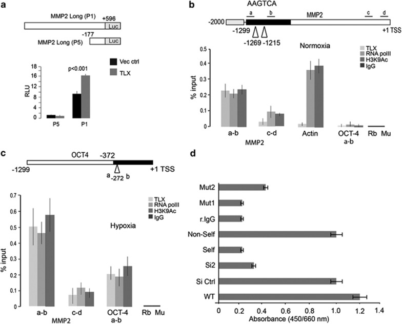 TLX transcriptionally regulates MMP-2 and Oct-4 in hypoxic NB cells. ( a ) Luciferase activity in 293T cells after co-transfection of MMP-2 promoter-luciferase constructs with TLX or control vector. ( b and c ) Top panels depict schematic representation of regions analyzed by ChIP within MMP-2 promoter or Oct-4 promoter ( c ). Occupancy of TLX, Pol-II and H3K9 acetylation across the 1.2 kb upstream regulatory regions of TLX-regulated genes MMP-2 and OCT-4 , and control actin promoter was monitored by ChIP analysis upon normoxia ( b ) or hypoxia ( c ). Chromatin was isolated from normoxia- or hypoxia-treated cells and ChIP analysis was performed as described in Materials and Methods. Amplicon from each immunoprecipitate is represented as the percentage of input. Each error bar indicates standard deviation calculated from triplicates. ( d ) Graph represents the binding of TLX to MMP-2 promoter as a function of absorbance at 450/650 nm. Biotin-labeled consensus oligos were used to capture TLX of nuclear lysate from WT IMR-32. A nonspecific capture oligo served as control, and rabbit IgG were used to exclude nonspecific binding. Mutant oligos (Mut1 or Mut2) were used to confirm the specificity of capture. The values obtained are means of three independent experiments along with S.D. as error bars