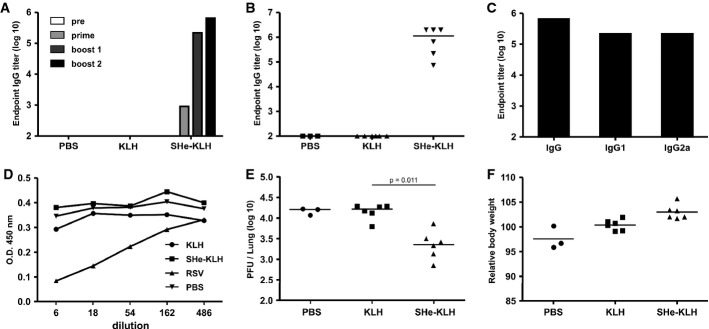 Immunization with SHe conjugate vaccine reduces HRSV replication in BALB/c mice SHe-KLH immunization induces SHe-specific serum IgG antibodies. BALB/c mice were immunized 3 times intraperitoneally with 20 μg KLH or SHe-KLH combined with incomplete Freund's adjuvant or with PBS. Serum was collected one day before the first immunization and 20 days after each immunization. Endpoint IgG titers of pooled sera from each group ( n = 6, except PBS group: n = 3) tested in a SHe peptide ELISA. Individual SHe-specific serum IgG titers obtained 20 days after the second boost immunization. Horizontal bars represent the median. SHe-specific serum IgG, IgG1, and IgG2 endpoint titers in pooled sera after the second boost immunization. SHe-KLH immune serum does not neutralize HRSV in vitro . An HRSV A2 in vitro neutralization assay using the indicated dilutions of pooled sera, obtained after the second boost vaccination of BALB/c mice immunized as in (A), was performed. RSV: serum from BALB/c mice that were previously infected with HRSV A2. The amount of viral antigen was quantified by ELISA using goat anti-HRSV immune serum. The graph shows the O.D. for each sample. Vaccination with SHe-KLH reduces HRSV A2 replication in the lungs of challenged BALB/c mice. The graph shows the number of PFU per lung for each mouse, sampled 5 days after challenge with 10 6 PFU of HRSV A2. Horizontal bars depict the median value (Dunn's multiple comparisons test). Challenged SHe-KLH-immunized BALB/c mice do not display weight loss. The graphs are representative for two independent experiments, and horizontal bars depict the mean value.