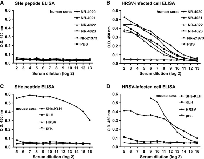 Human sera with high HRSV-neutralizing activity lack high levels of SHe-specific IgG A–D SHe peptide ELISA of human (A) and mouse (C) sera. Human reference sera to HRSV were obtained from the NIH Biodefense and Emerging Infections Research Resources Repository (NIAID, NIH). Antiserum NR-4020: pooled human reference serum; NR-4021: pooled human sera with high HRSV neutralization titer; NR-4022: pooled human sera with intermediate HRSV neutralization titer: NR-4023: pooled human sera with low HRSV neutralization titer; and NR-21973: human reference Ig to HRSV (1% Ig in PBS). The mouse sera represent pooled pre-immune sera (pre.), pooled immune sera from mice immunized three times intraperitoneally with SHe-KLH or KLH in combination with incomplete Freund's adjuvant, and pooled sera of mice infected with HRSV A2 (HRSV). HRSV-specific ELISA of human (B) and mouse (D) sera. The ELISA plates in (B) and (D) were coated with the supernatant of HRSV A2 infected cells and tested with the sera used in (A) and (C).