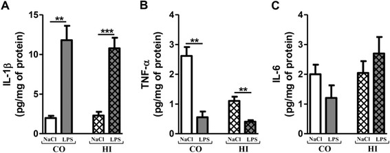 Pro-inflammatory cytokine levels after chronic LPS-induced inflammatory stress. IL1-β (A) , TNF-α (B) and IL-6 (C) levels in cortex (CO) and hippocampus (HI) from LPS-treated mice (0.5 mg/kg of LPS every 3 days for 3 months) or control (0.9% NaCl every 3 days for 3 months) by using ELISA assay. Treatment started at 3 months and mice were sacrificed at 6 months of age. Cytokine levels were expressed in pg/mg protein. Results are mean ± SEM for 6 mice in each group. ** p
