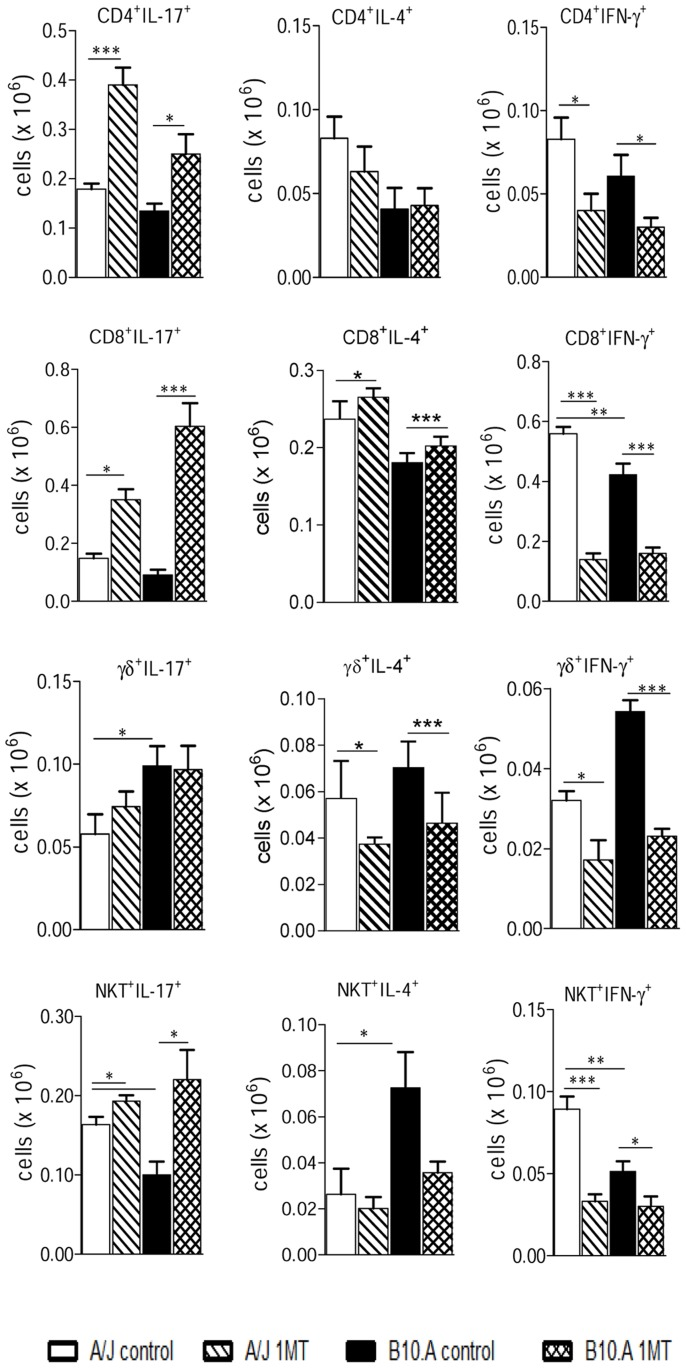 IDO blockade increases the presence of IL-17 + , but reduces the number of IFN-γ + T cells in the lungs of A/J and B10.A mice. Lymphocytes from lung infiltrating leukocytes (LIL) obtained from groups of 5–6 mice were gated based on forward/side scatters analysis. Gated cells were assessed for CD4 + , CD8 + , γδ + and NKT + markers using labeled antibodies. The presence of IL-17 + , IFN-γ + and IL-4 + T cells in the LIL was determined by intracellular cytokine staining at week 2 after infection. Lung cells were stimulated in vitro with PMA/ionomycin for 6 h, the last 4 h in the presence of brefeldin A, and subjected to intracellular staining for IL-17, IL-4 and IFN-γ. The results are representative of three experiments with equivalent results (* p
