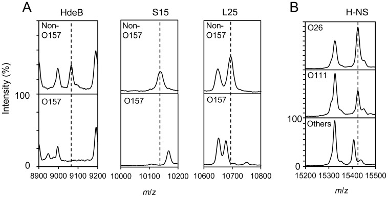 Typical mass spectra of four biomarker proteins in E. coli . A) MALDI mass spectra of non-EHEC E. coli strain NBRC12713 and EHEC E. coli strain O157 GTC 14513. Three biomarker peaks, HdeB ( m/z 9066.2 [M+H] + ), ribosomal protein S15 ( m/z 10138.6/10166.6 [M+H] + ) and L25 ( m/z 10676.4/10694.4 [M+H] + ), measured using sinapic acid as the matrix, are shown. B) Biomarker peak of DNA binding protein H-NS ( m/z 15409.4/15425.4 [M+H] + ) for strains O26, O111 and other E. coli .