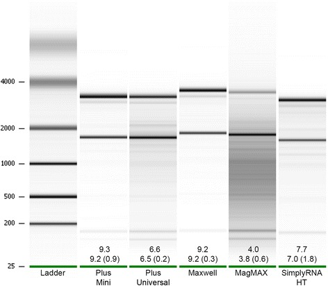 "A representative example of the gel images produced during RNA quality checks performed via the Bioanalyzer 2100.  The composite gel image was generated from the results of RNA quality assessments performed on RNA extracted from larvae samples. For each kit, the lane corresponding to the sample that best represented the ""average"" RNA yielded is included. The first number reported for each kit represents the RIN value of the sample shown, while the numbers below represent the mean RIN value (± standard deviation) for all larvae samples extracted via each kit. Note that the lanes shown in the image were not obtained from samples run on the same Nanochip resulting in the misalignment of the 18S and 28S bands between some of the lanes."