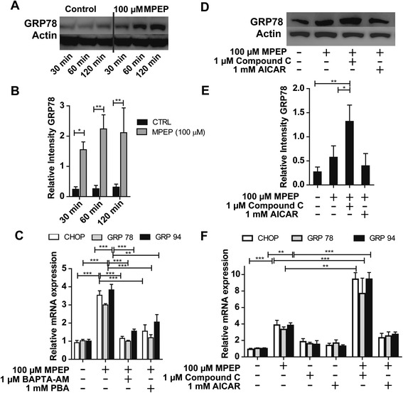Induction of endoplasmic reticulum (ER)-stress markers by blockage of mGluR5. (A) Immunoblot analyses to detect GRP78 protein were performed on lysates of BV-2 cells that had been treated with 100 μM MPEP for the indicated time period. β-actin served as a loading control. (B) Densitometric analysis of GRP78 band normalized against β-actin. (C) Cells were preincubated for 1 hour with 1 μM BAPTA-AM or 1 mM sodium phenylbutyrate (PBA), followed by further incubation with 100 μM MPEP for 24 hours. Expression of CHOP, GRP78 and GRP94 mRNA were measured by quantitative PCR. (D) Cells were pre-exposed for 1 hour with 1 mM AICAR or 1 μM compound C, followed by a further incubation with 100 μM MPEP for 2 hours and GRP78 protein levels were analyzed by immunoblotting. (E) Densitometric analysis of GRP78 band normalized against β-actin. (F) Cells were pre-exposed for 1 hour with 1 mM AICAR or 1 μM compound C, followed by a further incubation with 100 μM MPEP. Expression of CHOP, GRP78 and GRP94 mRNA were measured by quantitative PCR and mRNA expression levels were normalized to GAPDH control. Results represent mean ± SD of three independent experiments. Significance was analyzed by one-way ANOVA followed by Tukey's tests. ** P