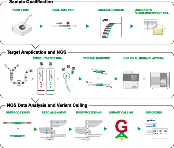 """Technology overview of NGS using the 1052-amplicon targeted sequencing panel. Sample qualification is performed using a real-time PCR assay to determine the percent """"functional"""" DNA copies in FFPE samples using the Quantitative Functional Index (QFI). The library preparation is based on RainDance technologies picodroplet PCR to amplify target sequences with subsequent sequencing on an <t>Illumina</t> platform <t>(GAIIx</t> or HiSeq). The bioinformatics workflow trims adaptors and filters out low-quality reads, then includes genomic alignments, variant calling and result reporting (See Materials and Methods for more details and Additional file 1 : Figure S6 for the result visualization)."""