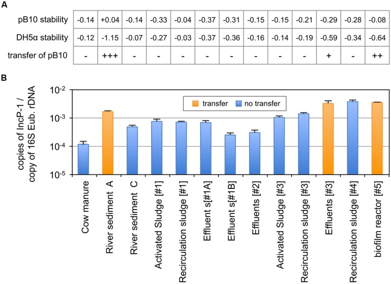 Dissemination of plasmid pB10 (A) and relative abundance of IncP-1α/β plasmids (B) in various environmental communities maintained in microcosms. The ability of each environmental matrix to support the dissemination of plasmid pB10 was deduced from the comparison of pB10 and E. coli DH5α DNA relative stabilities in microcosms overtime (rate of disappearance), as exemplified in Figure 1 for sediments A–C. Transfer of pB10 was considered as effective (+) when pB10 stability appeared significantly greater than the stability of its initial donor host. Close rate of disappearance for both pB10 and E. coli DH5α reflects an absence of transfer (-). Values between brackets represent the number of the corresponding WWTPs. effluents [#1] were sampled twice in May 2011(#1A) and February 2012 (#1B). Each data point is an average of 3 values obtained from triplicate qPCR, where error bars represent standard deviation.