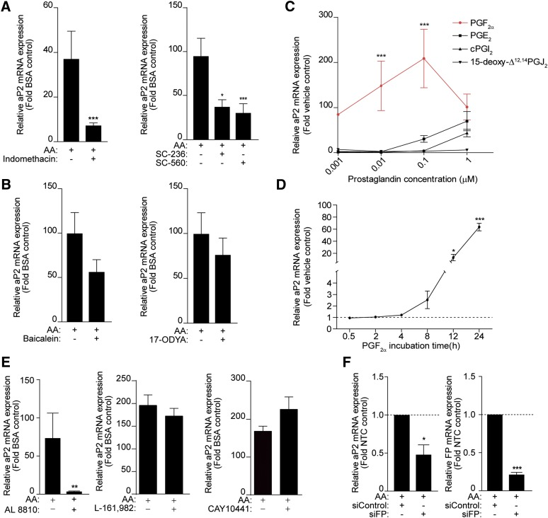 PGF 2α mediates the effect of AA on aP2 expression in 3T3-L1 cells. 3T3-L1 cells (day 0) were pretreated with indomethacin (10 μM), SC-236 (10 μM), and SC-560 (10 μM) (A) and baicalein (10 μM) or 17-ODYA (10 μM) (B) for 30 min prior to AA (100 μM) treatment for 24 h in the presence of MDI. Total RNA was isolated and RT-PCR was performed. C: 3T3-L1 cells (day 0) were treated with 1 nM, 10 nM, 100 nM, or 1 μM of PGF 2α , PGE 2 , cPGI 2 , and 15-deoxy-Δ 12,14 PGJ 2 for 24 h in the presence of MDI. The red line is the PGF 2α treatment. D: 3T3-L1 cells (day 0) were treated with PGF 2α (10 nM) in the presence of MDI for 24 h. E: 3T3-L1 cells (day 0) were pretreated with AL 8810 (10 μM), L-161,982 (10 μM), or CAY10441 (10 μM) for 30 min prior to 100 μM AA treatment for 24 h. F: Eighty percent confluent 3T3-L1 cells were transfected with a nontargeting control siRNA (siControl) or siRNA targeting the FP receptor (siFP). On the third day after transfection, cells were treated with 100 μM AA for 24 h in the presence of MDI. RT-PCR was conducted for aP2 mRNA and FP receptor transcripts. Data are presented as mean ± SEM of n = 3. * P