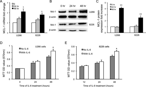IL-6 enhanced MCL-1 expression and MM cell growth. Human U266 and 8226 MM cells were cultured in RPMI and stimulated with IL-6 for 0, 24 or 48 hours. (A) MCL-1 gene expression in the cells was quantified by qRT-PCR. mRNA fold change was presented. (B) MCL-1 protein expression was detected by Western blot with anti-MCL-1 specific antibodies. (C) MCL-1 protein expression in IL-6 treated group was quantified based on β-actin level and in comparison with untreated cells. (D and E) U266 and 8226 MM cell growth after IL-6 treatment was measured by MTT assay. Cell growth was presented as OD values. Data represents three independent experiments. *, P