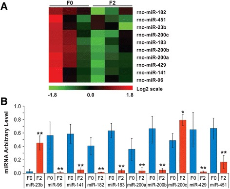 Ancestral stress alters brain miRNA expression. (A) Heat map of miRNA expression modulated by multigenerational stress in brains of F2-SSS dams. (B) Confirmation of miRNA level changes in brains of F0-S and F2-SSS compared to non-stress F0-N rats by qRT-PCR. Ancestral programming by stress particularly involved the miR-200 family. Sno202, U6 and 5 s rRNA were used as references. Asterisks indicate significances: * P