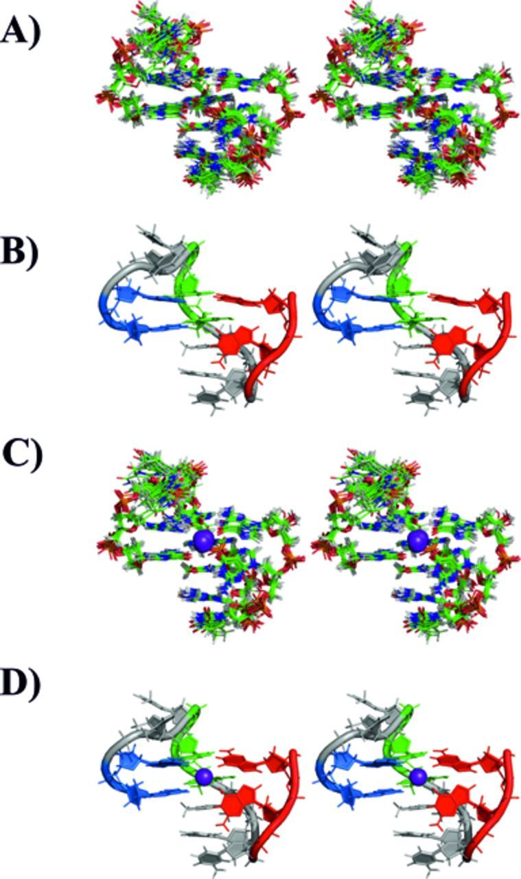 Stereo view representation (crossed eyes) of the family of 10 structures of 11-mer-3′-t-TBA with lowest XPLOR-NIH energy, and after AMBER rMDs (A). The member of the family closest to the mean structure is shown in panel (B) as cartoon. The corresponding family of structures minimized in the presence of the potassium ion is shown in panel (C). The member of the family bearing the potassium ion and closest to the mean structure is shown in panel (D) as cartoon. The potassium ion is shown as a violet sphere.