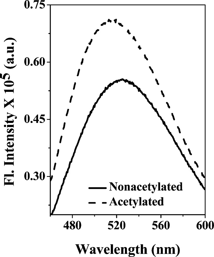 Acetylation exposes additional hydrophobic sites at the surface of γD-crystallin. The concentrations of the protein samples and bis-ANS were 2.5 μM and 10 μM, respectively. All samples were prepared in 10 mM phosphate buffer, 5 mM DTT, and 1 mM EDTA (pH 7.0). The fluorescence spectrum of bis-ANS bound to different samples was recorded from 450 to 600 nm at 25 °C. The excitation wavelength was 390 nm.
