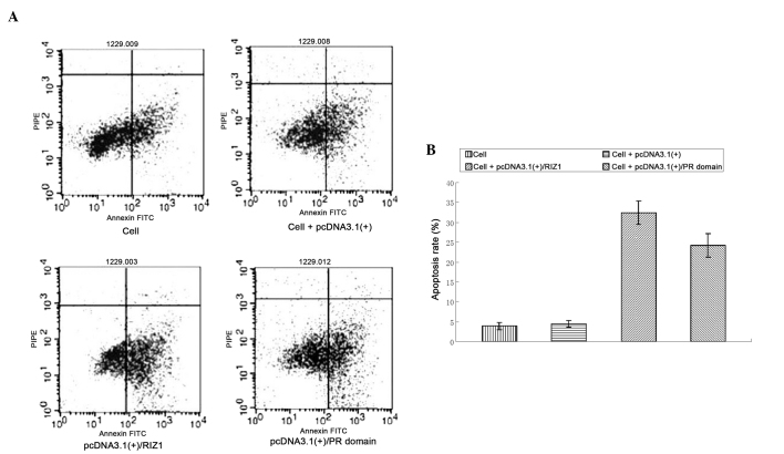 Flow cytometric analysis of apoptosis in TE13 esophageal squamous cell carcinoma cells transfected with either pcDNA3.1(+)/RIZ1 or pcDNA3.1(+)/positive regulatory (PR) domain. (A) Representative flow cytometric plots. (B) The proportion of apoptotic cells was significantly higher in cells transfected with pcDNA3.1(+)/RIZ1 or pcDNA3.1(+)/PR domain (P