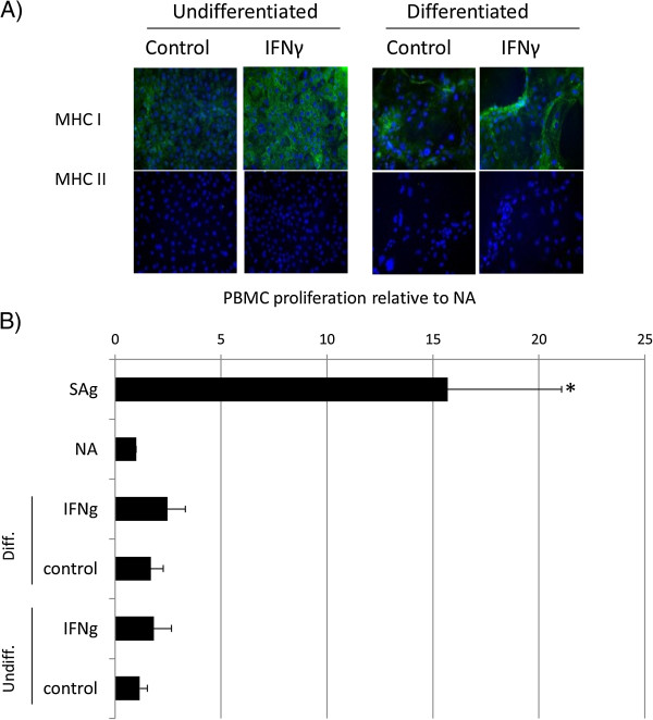 Proliferation of equine PBMCs is not induced by co-culture with equine ESCs. (A) Immunocytochemical staining of IFN-γ-treated embryo-derived stem cells (ESCs) for MHC I and MHC II. Cell nuclei are indicated by blue Dapi staining, and expressed MHC I or II proteins, by green staining. Representative images from one of three replicates are shown. (B) Relative proliferation of peripheral blood mononuclear cells (PBMCs) to undifferentiated (ESCs) and differentiated (dES) ESCs cultured in the presence and absence of IFN-γ, where NA is baseline, nonactivated PBMC proliferation; sAg is superantigen-stimulated PBMCs (positive control); IFN-γ is 72-hour pretreated undifferentiated or differentiated ESC. *Results significantly different relative proliferation when compared with NA PBMCs ( P