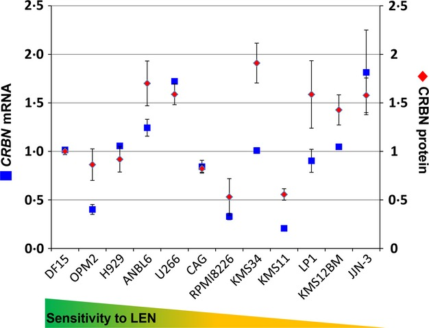 CRBN mRNA and CRBN protein levels do not correlate in MM cell lines with intrinsic sensitivity or resistance to the IMiD agent lenalidomide. CRBN mRNA and CRBN protein levels were measured in 12 human MM cell lines by TaqMan polymerase chain reaction and Western blot, respectively. mRNA and protein were normalized to HRPT1 and β-tubulin, respectively. Graph represents the average of 3–4 experiments. CRBN, cereblon; LEN, lenalidomide; MM, multiple myeloma; mRNA, messenger RNA.
