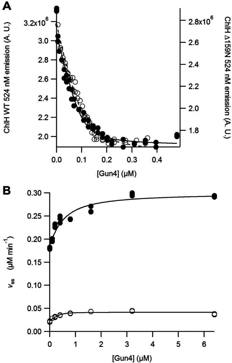 Gun4 is able to associate with and stimulate activity of ΔN159ChlH ( A ) FRET association experiment between Gun4 and WT ChlH (●) or ΔN159ChlH (○). Assays contained 0.1 μM ChlH, in 50 mM Tricine/NaOH, 0.3 M glycerol and 200 mM NaCl, pH 7.9, at 45°C. ChlH was labelled with Atto 488 and Gun4 labelled with Alexa Fluor 532. The quenching of emission of Atto 488 was monitored at 524 nm. A.U.–arbitrary units. The curves can be described by eqn ( 1 ) with the concentration term, [ChlH], held at 0.1 μM with characterizing parameters: WT ChlH K d =0.009±0.003 μM and Δ159ChlH K d =0.016±0.004 μM. ( B ) Assembly titrations of MgCH between Gun4. Assays contained 0.1 μM ChlD, 0.2 μM ChlI, 0.4 μM ChlH in 50 mM Mops/KOH, 0.3 M glycerol, 1 mM DTT, 10 mM free Mg 2+ , I =0.1 with KCl and 8 μM D IX , pH 7.7, at 45°C. The curves can be described by eqn ( 2 ). n d was held at 0.4 (i.e. one binding site on ChlH for Gun4) based on the fit in ( A ) with characterizing parameters WT ChlH K app =0.39±0.14 μM and Δ159ChlH K app =0.05±0.03 μM.