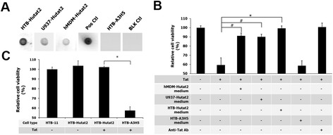 Evaluation of the biological binding function of Hutat2:Fc and protective effects of Hutat2:Fc against HIV-1 Tat 86 -mediated toxicity in HTB-11 cells. (A) Specific binding of Hutat2:Fc to HIV-1 Tat. HIV-1 Tat 86 (Clade B) loaded nitrocellular membranes (NCM) were incubated with cell culture supernatants collected from HR-Hutat2-transduced HTB-11 (HTB-Hutat2), U937 (U937-Hutat2), or hMDM (hMDM-Hutat2) at 4°C overnight followed by incubation with rabbit anti-human IgG (H+L) and goat anti-rabbit IgG HRP conjugated antibodies. Specific binding was visualized by the color deposition on the NCM. The Tat 86 -loaded membrane incubated with rabbit anti-Tat serum served as a positive control (Pos Ctl) while incubated with cell culture supernatant from HR-A3H5 transduced HTB-11 served as a negative control (HTB-A3H5). The NCM loaded with Tat dilution buffer was used as a blank control (BLK Ctl). (B) Functional antagonization of Hutat2:Fc against HIV-1 Tat 86 -induced toxicity in HTB-11 cells by an MTT assay. The OD 570 value of untreated HTB-11 cells was arbitrarily defined as 100% cell viability. The relative cell viability (%) was expressed as a percentage relative to the untreated control cells. The cell viability was significantly higher for the cells treated with the conditioned mediums from transduced cells releasing Hutat:Fc when compared to the cultures that received Tat 86 (500 nM) alone (* P