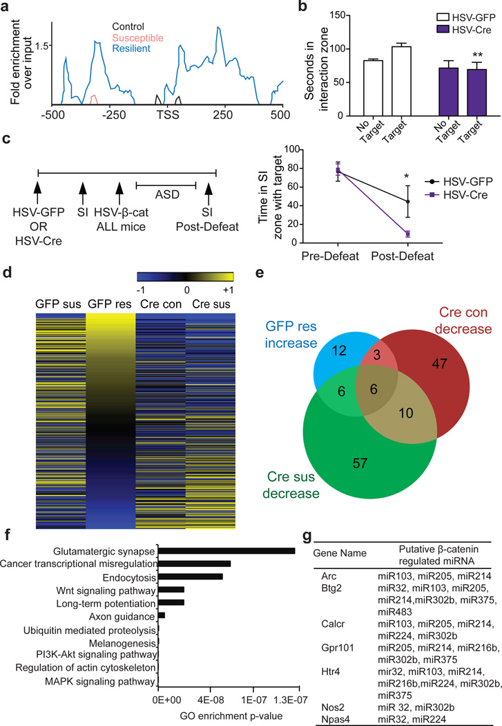 Dicer1 bridges β-catenin and miRNA regulation in CSDS a, β-catenin ChIP-seq enrichment around the Dicer1 TSS. b, Effect of NAc Dicer1 knockdown (HSV-Cre) in sub-threshold defeat with HSV-GFP as control (**P