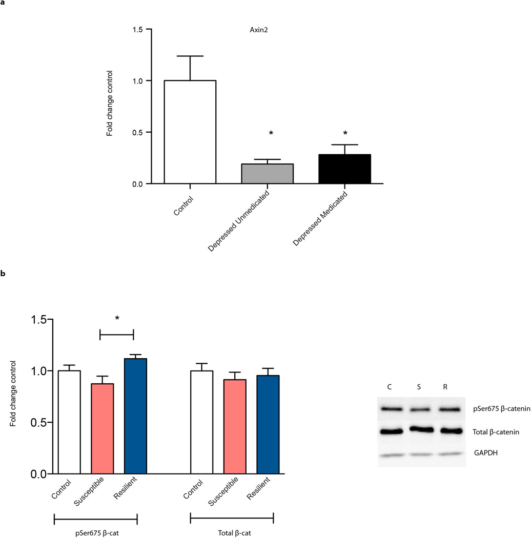 Regulation of β-catenin signaling in human depression and after CSDS in mice a, Axin2 expression is suppressed in both medicated and unmedicated depressed patients, both groups of which were clinically depressed at their time of death (F 2,13 =7.425, P
