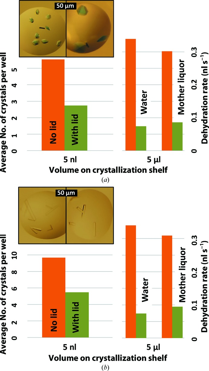 Plate lids result in better and more reproducible crystals. The figure shows crystals that were grown using 2.5nl precipitant solution and 2.5nl lysozyme ( a ) and trypsin ( b ) solution in CrystalQuick plates (approximately 2½min for the Echo 550 to prepare each plate). Each type of protein was prepared on a plate that had a lid and on a plate that did not have a plate lid. On average, using a plate lid resulted in fewer but larger crystals of lysozyme and trypsin (left). The number of thaumatin crystals was approximately constant. X-ray data were obtained from one of the lysozyme crystals in each well in the middle row of the plate (row  D ). The data from crystals prepared using lids were merged and compared with the data from crystals prepared without lids. We also used the technique described in § 2.1 to measure the evaporation rate for each of the three types of mother liquor with no plate lid, and compared this with the deduced evaporation rate with a plate lid (right). Using lids during the 2½min required for the Echo 550 to set up the 5nl crystallization droplets allowed better, more reproducible and better diffracting crystals to be obtained.