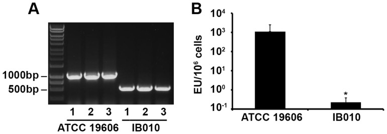 Mutation and endotoxin content of IB010. (A) Genomic DNA from three independent cultures of ATCC 19606 and IB010 was extracted and amplified using primers specific for the lpxD gene. The band corresponding to approximately 1000 Kb corresponds to the intact lpxD gene, whereas the faster migrating band corresponds to the lpx D gene with a deletion of 462 nucleotides. (B) Endotoxin levels of ATCC 19606 and IB010 determined by the Limulus Amebocyte Assay. Bars represent the median values of three independent cultures, and error bars represent the standard error of the mean. EU; endotoxin units.