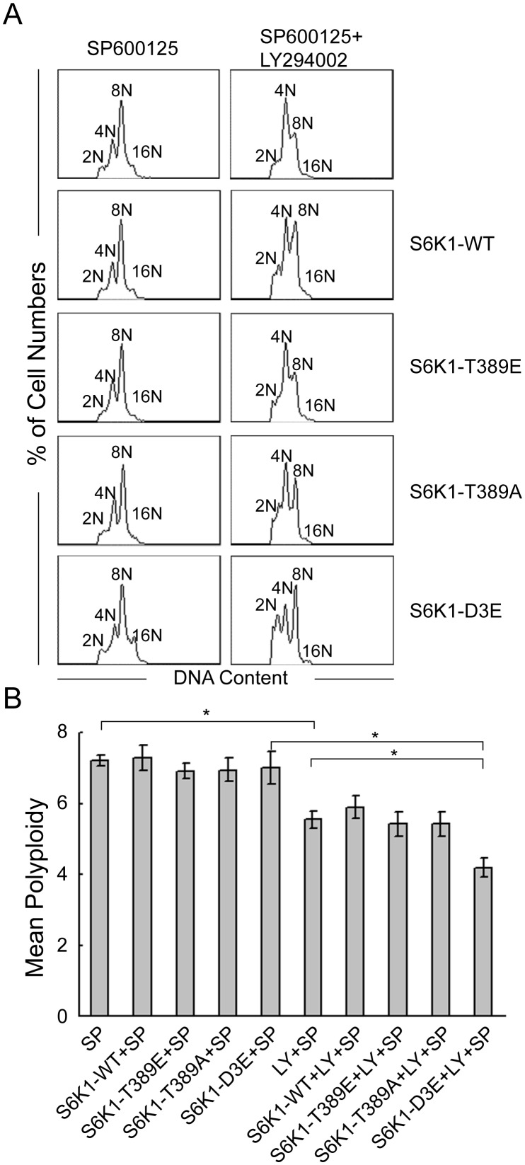 Effects of S6K1 mutant plasmids on SP600125-induced Dami cells. Dami cells were transfected with or without S6K1-WT, S6K1-T389E, S6K1-T389A and S6K1-D3E and cultured overnight. The cells were then induced with SP600125 for 72 hours after pretreatment with or without LY294002 for 1 hour. (A) Representative DNA histograms of Dami cells in each condition. (B) The data are presented as the mean±SEM of the level of polyploidy and were obtained from 4 separate experiments; *p