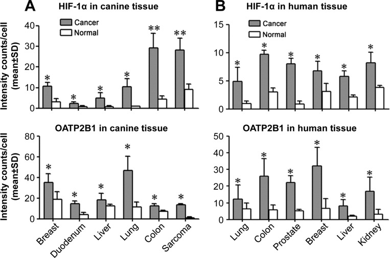 Aberrant expression of HIF-1α and selected OATP genes in cancers Double QDL analysis was used to quantify HIF-1α and OATP2B1 protein expression in paired cancer and normal (derived from cancer-adjacent normal tissue from the same patient) tissue specimens from either canine (A) or human (B) cancer patients (N=5 patients for each type of cancer). Average signal intensity counts from 1,000 cells were quantified using inForm software. * P