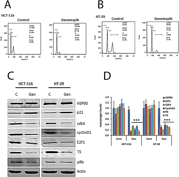 Cell cycle effects of ganetespib in colorectal cancer cell lines. Inhibition of HSP90 decreases levels of Cdk4, cyclin D1, pRb, E2F1, and TS and increases p21 (A B) Cells were treated with vehicle (DMSO) or ganetespib (50nM) for 24 hours. Cell cycle arrest and the DNA content of CRC cells were measured by FACS analysis. Representative images from (a) HCT-116 and (B) HT-29 untreated and treated cells. (C) Cells were treated with vehicle (DMSO) or ganetespib (50nM) for 24 hours. Protein was extracted as described in the Methods section. Western blot analysis revealed increased expression of p21 and decreased expression of Cdk4, cyclin D1, pRb, E2F1, and TS in both cell lines treated with ganetespib. (D) Cells were treated with vehicle (DMSO) or ganetespib (50nM) for 24 hours. mRNA was extracted as described in the Methods section. mRNA was analyzed by qRT-PCR using primers for the indicated genes. Comparable qRT-PCR results were normalized with actin. Each value represents the mean ± standard deviation, obtained from determinations made on five cultures per experimental condition. qRT-PCR, quantitative real time-polymerase chain reaction. Ganetespib-treated HCT-116 and HT-29 cells showed significantly (*** p
