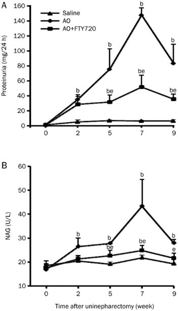 Effect of FTY720 on urinary protein and NAG. Time course of proteinuria (A) and N -acetyl-β- D -glycosaminidase (NAG) activity (B) in saline controls, AO rats, and FTY720-treated rats. Values are presented as the mean±SEM. n =6. b P