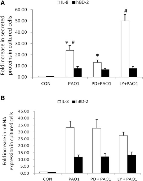 The involvement of ERK and PI3K/Akt signal pathways in P. aeruginosa -induced IL-8 in SW480 cells. (A) Effect of ERK and PI3K inhibition on P. aeruginosa -induced IL-8 and hBD-2 secretion. SW480 cells were left untreated, or treated with 25 μM PD98059 (PD) and 50 μM LY294002 (LY) for one hour. They were then infected with the wild-type P. aeruginosa strain PAO1 for 7 hours. Supernatant was analyzed by ELISA for IL-8 and hBD-2. The amount of IL-8 and hBD-2 produced is shown as the fold increase over uninfected control (CON) cells. (B) Effect of ERK and PI3K inhibition on P. aeruginosa -induced IL-8 and hBD-2 mRNA. SW480 cells were left untreated, or treated with 25 μM PD98059 (PD) and 50 μM LY294002 (LY). They were then infected with the wild-type P. aeruginosa strain PAO1 for 7 hours. Total RNA was prepared and analyzed by real-time quantitative PCR to estimate amounts of IL-8 and hBD-2 transcript. The amount of IL-8 and hBD-2 mRNA produced, normalized to the corresponding amount of GAPDH transcript, is shown as the fold increase over uninfected control (CON) cells. Results are represented as means ± S.E.M. for at least three determinations from independent experiments. (* p