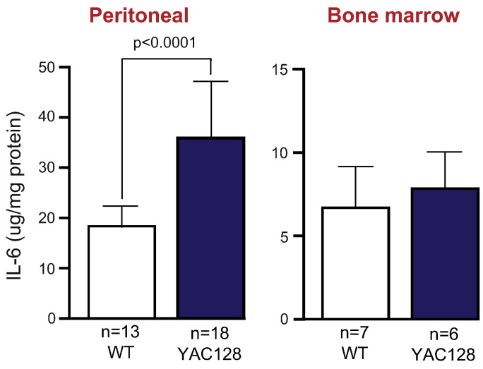 Altered cytokine production by macrophages from YAC128 mice. Peritoneal macrophages obtained via peritoneal lavage were stimulated with CSE for 24 h before IL-6 levels were measured using ELISA. A significant increase in cytokine production by YAC128 peritoneal macrophages was seen when compared with wild-type. Macrophages were also differentiated from bone marrow monocytes of three month old YAC128 and wild-type mice using M-CSF before stimulation with CSE for 24 h. Measuring IL-6 levels using ELISA showed no difference in cytokine production from YAC128 bone marrow-derived cells compared with wild-type controls. Graphs show mean concentrations corrected to protein content ± SEM. Unpaired two-tailed Student's t -tests.