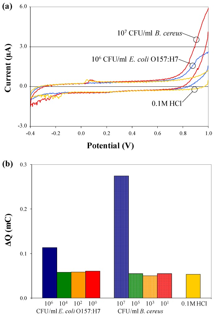 Cyclic voltammograms ( a ) and charge transfer values; ( b ) for electrochemical tests performed on pure B. cereus and E. coli O157:H7 cells, suspended at various concentrations in 0.1 M HCl solution, in the absence of c/sNPs.