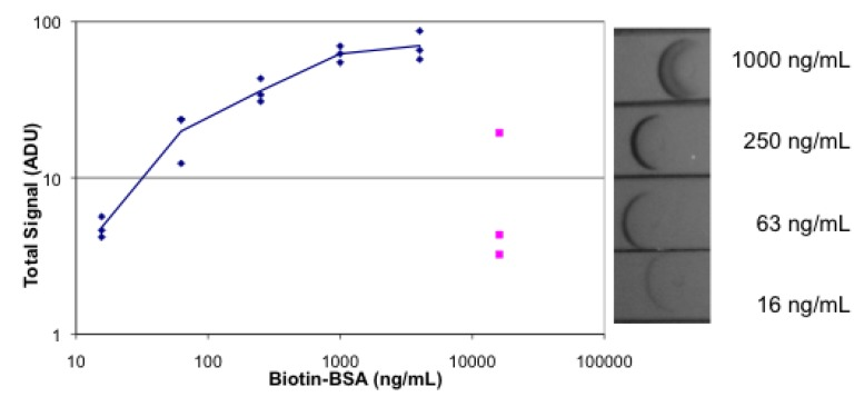 Absorbance lateral flow images and plot. The strips were spotted with streptavidin. Dilutions of biotinylated BSA, followed by gold-labeled streptavidin, followed by buffer were absorbed on the strips. Each concentration was tested in triplicate. Images were obtained with the camera of an iPhone 4. Image analysis was done with Image J and the results plotted. A sample of the images is shown on the right.