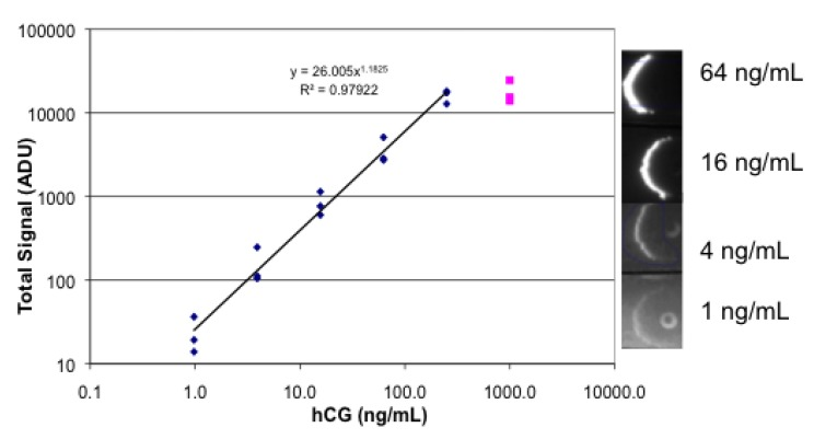 Images and data for fluorescence lateral flow analysis of hCG. Lateral flow strips were spotted with goat anti-hCG, then dipped successively in a dilution series of hCG, followed by RPE streptavidin mixed with biotinylated mouse anti-hCG, followed by buffer. Each concentration of hCG was tested in triplicate.