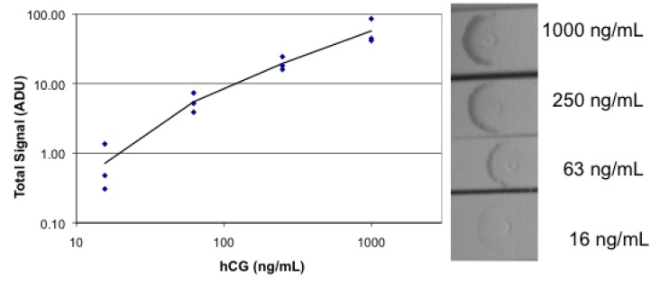 Images and plot of absorbance lateral flow analysis of hCG. Lateral flow strips were spotted with goat anti-hCG, then dipped successively in a dilution series of hCG, followed by gold streptavidin mixed with biotinylated mouse anti-hCG, followed by buffer. Each concentration of hCG was tested in triplicate.