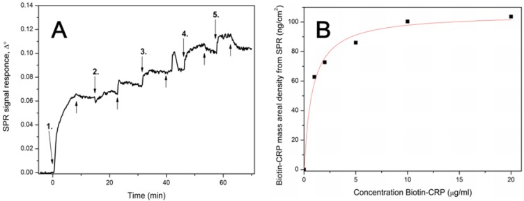 ( A ) SPR signal response after injecting 1–20 μg/mL bio-CRP antigen in HEPES-EDTA buffer over MuOH:Biotin-PEG-thiol (85:15 mol%)/streptavidin sensor surface. Down arrows represents the time of bio-CRP antigen injections: 1. = 1 µg/mL, 2. = 2 µg/mL, 3. = 5 µg/mL, 4. = 10 µg/mL and 5. = 20 µg/mL. Up arrows represents the injection of buffer without bio-CRP antigen. ( B ) Mass areal density of bio-CRP antigen showing the Langmuir fit over the data points.