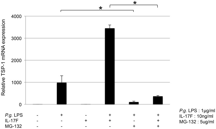MG-132 inhibited TSP-1 mRNA expression in THP-1 cells. THP-1 cells were pretreated with 5.0 ng/ml of MG-132 (inhibitor of NF-κB) for 1 h, followed by the addition of 1.0 µg/ml of P. gingivalis LPS and 10 ng/ml of IL-17F. P. gingivalis LPS-induced TSP-1 mRNA was significantly reduced by MG-132. MG-132 also significantly reduced TSP-1 mRNA expression induced by P. gingivalis LPS together with IL-17F.