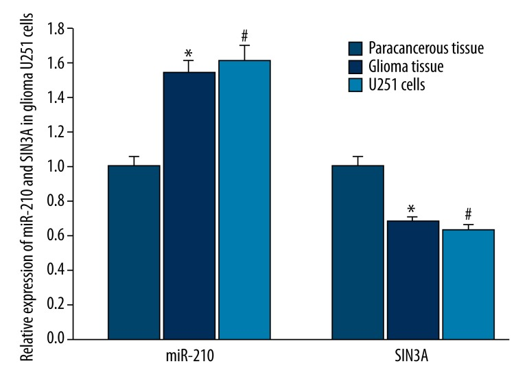 qRT-PCR analysis for the expression of miR-210 and SIN3A in brain glioma tissue and U251 cells. Compared to paracancerous tissue, the expression of miR-210 was higher in brain glioma tissue and U251 cells ( P