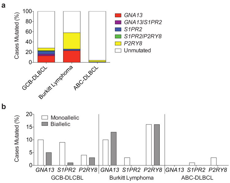 Frequency of mutations in GNA13, S1PR2 and P2RY8 in aggressive lymphoma (a-b) Summary of overall mutation frequencies (a) and allelic frequencies (b) of non-synonymous coding mutations in S1PR2 , GNA13 and P2RY8 in GCB-DLBCL, BL or ABC-DLBCL cases shown in Supplementary Table 2 . Unmutated indicates no coding region mutations in the genes shown. Since the sequencing was performed on genomic DNA the data may underestimate the frequency of biallelic cases as some disruptive mutations may occur in non-coding regulatory elements.