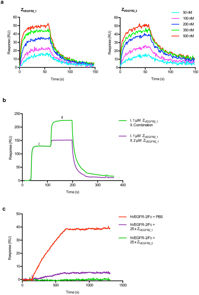 Characterization of VEGFR2-binding Affibody molecules from phage display selection. (a) Sensorgrams from SPR analysis of Z VEGFR2_1 and Z VEGFR2_2 binding to immobilized human VEGFR2. Affibody molecules were injected at concentrations ranging from 50 nM to 500 nM. Data is double referenced by subtraction of simultaneous responses from reference surface and a buffer injection. The experiment was performed in duplicates. (b) Representative results from SPR-based competition assay. Sensorgrams were obtained from a double injection, where a first injection of 1 μM of Z VEGFR2_1 (I) was immediately followed by a second injection (II) of either a combination of 1 μM of Z VEGFR2_1 and 1 μM of Z VEGFR2_2 , or 2 μM of Z VEGFR2_1 , over immobilized human VEGFR2. The experiment was performed in duplicates. (c) Representative results from SPR-based analysis of human VEGF blocking. 40 nM of human VEGFR2, which had been pre-incubated for 40 min with a 25 × molar excess of Z VEGFR2_1 , Z VEGFR2_2 or PBS (control), was injected over a surface of immobilized human VEGF-A. The experiment was performed in duplicates.
