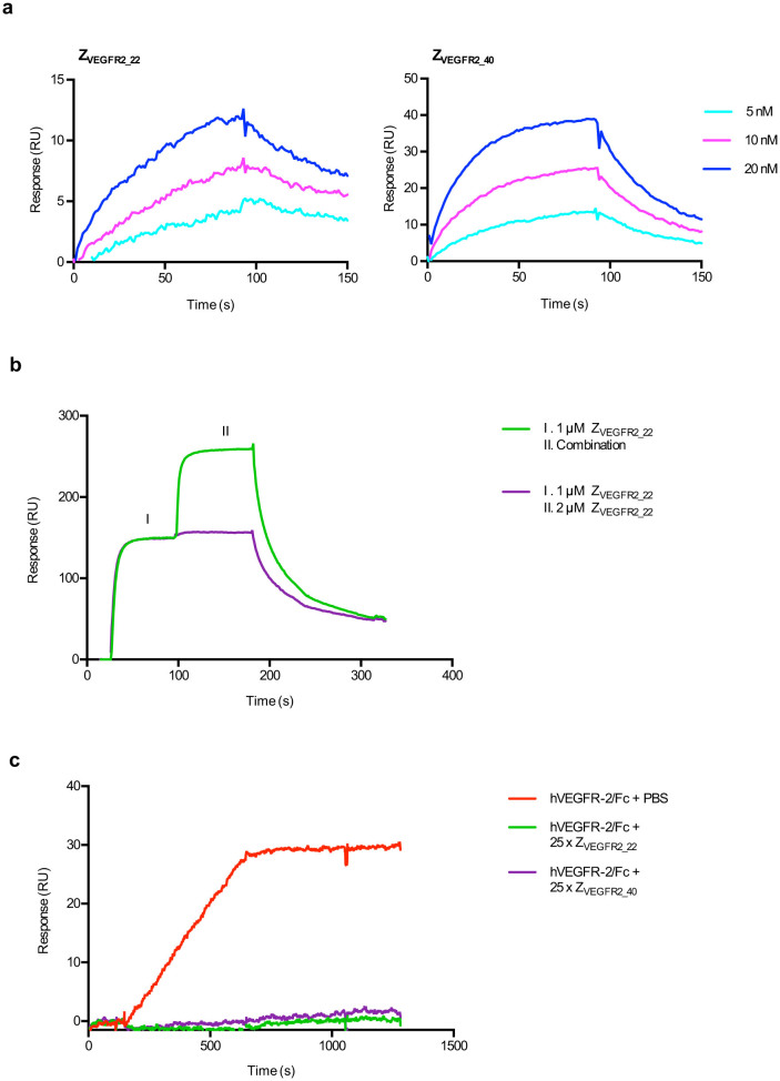Characterization of affinity matured VEGFR2-binding Affibody molecules selected by staphylococcal display. (a) Representative sensorgrams from SPR analysis of affinity-matured Affibody molecules (Z VEGFR2_22 and Z VEGFR2_40 ) binding to immobilized VEGFR2, showing the response signal. Affibody molecules were injected at concentrations of 5, 10 and 20 nM. Data is referenced by subtraction of simultaneous responses from reference surface. The experiment was performed in duplicates. (b) Representative results from SPR-based competition assay. Sensorgrams were obtained from a double injection, where 1 μM of Z VEGFR2_22 was injected (1), immediately followed by a second injection (2) of either a combination of 1 μM of Z VEGFR2_22 and 1 μM of Z VEGFR2_40 , or 2 μM of Z VEGFR2_22 , over immobilized human or murine VEGFR2. The experiment was performed in duplicates. (c) Representative results from SPR-based assay of VEGF blocking. 40 nM of human VEGFR2, which had been pre-incubated for 40 min with a 25 × molar excess of Z VEGFR2_22 , was injected over a surface of immobilized human VEGF-A. The experiment was performed in duplicates.