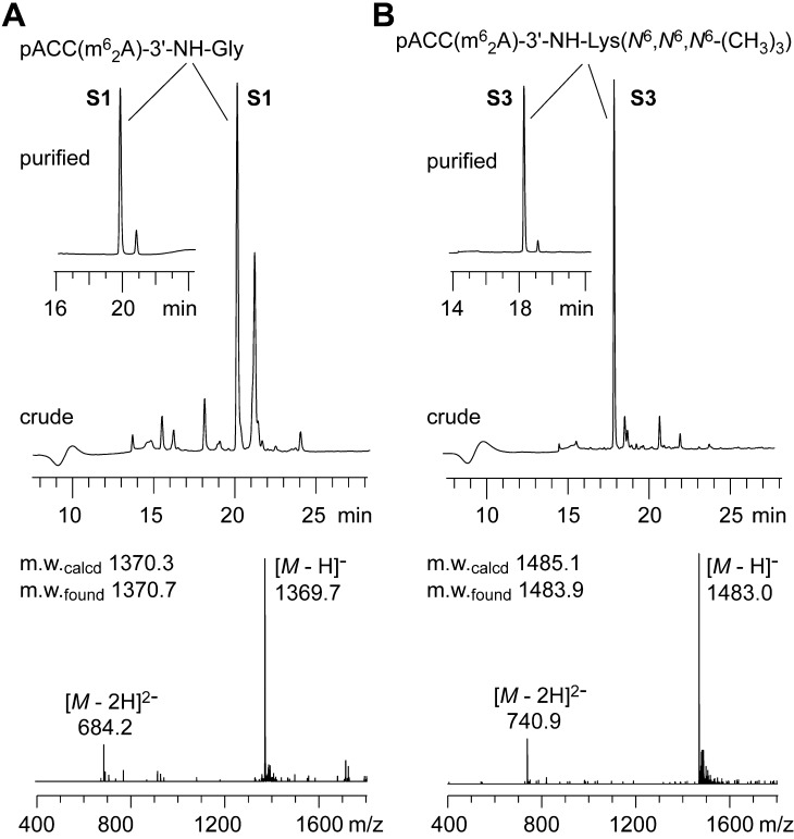 Synthesis of RNA-peptide conjugates based on the modified solid supports 8 and 10 . Anion-exchange HPLC profiles of crude and purified (insets) conjugates S1 and S3 ( A , B ; upper panels) and LC-ESI mass spectra of purified products ( A , B ; lower panels). Anion-exchange chromatography conditions: Dionex DNAPac®PA-100 (4 × 250 mm) column; temperature: 60 °C; flow rate: 1 mL/min; eluant A: 25 mM Tris·HCl (pH 8.0), 6 M urea; eluant B: 25 mM Tris·HCl (pH 8.0), 6 M urea, 500 mM NaClO 4 ; gradient: 0–40% B in A within 25 min; UV detection at 260 nm.