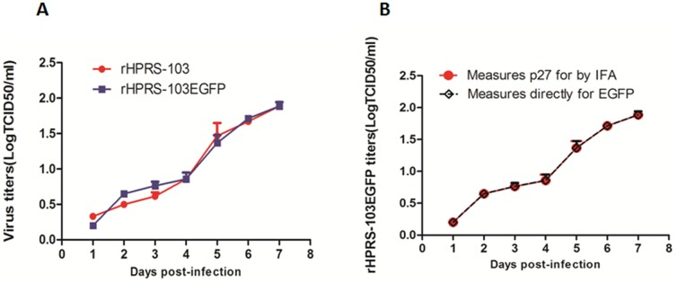 Replication of rHPRS-103EGFP and rHPRS-103. A, Growth kinetics assay of rHPRS-103EGFP and rHPRS-103. B, The growth kinetics of rHPRS-103EGFP was measured by p27 expression using IFA while the fluorescence is a direct measure of EGFP-positive cells.