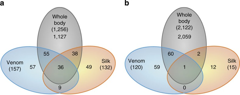 Proteomics. Venn diagrams with number of identified proteins based on 194 LC-MS/MS analyses ( Supplementary Table 3 ). The silk analyses are based on in-solution trypsin digestion, while the body analyses are based on in-gel trypsin digestion. The venom analyses are based on a combination of the two methods. ( a ) Velvet spider. ( b ) Tarantula.