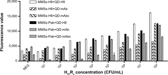 LOD detection for six combinations of MMSs coupled with H8 or Pab and QDs conjugated with H8, Mab, or mabc. Notes: Differences in MTB detection capability between the combinations were evident for a range of MTB concentrations in the test. Combinations of MMS-H8+QD-mAb and MMS-Pab+QD-mAbc produced a strong signal for only 10 7 CFU/mL H 37 R v cells, indicating relatively poor MTB detection capability. Combinations of MMS-H8+QD-mAbc and MMS-Pab+QD-mAb exhibited a higher but decreasing fluorescence intensity of H 37 R v for 10 5 CFU/mL or 10 6 CFU/mL, showing improved MTB detection capability. Combinations of MMS-Pab+QD-H8 and MMS-H8+QD-H8 yield a significantly higher signal for 10 3 CFU/mL H 37 R v and thus demonstrated the best MTB detection capability. Abbreviations: LOD, limit of detection; MMSs, magnetic microspheres; QDs, quantum dots; Pab, a rabbit polyclonal antibody against MTB; mAb, a murine monoclonal antibody against MTB; mAbc, a murine monoclonal antibody against MTB heat shock protein 65 (HSP65); CFU, colony-forming unit; mAbc, .