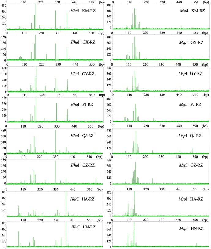 T-RFLP profiles for the rhizomes of Alpinia officinarum Hance plants from various growth sites. The profiles were generated via either <t>Hha</t> I or <t>Msp</t> I mono-digestion T-RFLP method targeting amplified fungal rDNA ITS sequences from the rhizomes of A. officinarum grown at eight different sites at varying geographic distances from each other. The T-RFLP analysis was repeated in three independent samples for each site, and representative T-RFLP profiles are shown.