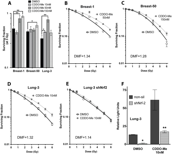 CDDO-Me is a potent radiation countermeasure in bronchial and breast epithelial cells, and Nrf2 knockdown abrogates these radioprotective effects. (A) Normal breast and lung epithelia are radioprotected at multiple doses of CDDO-Me. Cells were treated with drug 18 hours before exposure to 3 Gy gamma IR, then seeded immediately into clonogenicity. Colonies grown for ∼14 days before fixation with 6% glutaraldehyde/0.5% crystal violet stain. Mean ± SEM of four experiments seeded in triplicate, *p