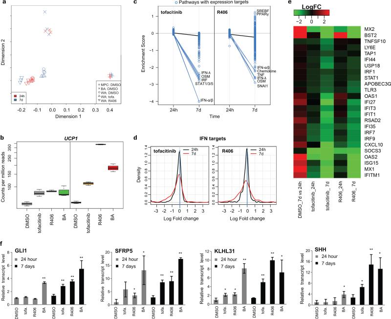 """Gene signature and cellular identity of JAK-inactivated adipocytes a-f) Adipocytes were differentiated according to scheme 1B, treated with tofacitinib and R406 at day 7, and collected at day 8 (24h time point) or day 14 (d7 time point). N= 3 biological replicates. Each independent biological replicate was pooled from two individual wells. a) Multi-dimensional scaling of RNA sequencing data revealing the white lineage identity of tofacitinib (tofa.) and R406 treated PSC-WA. b) Levels of UCP1 transcripts served as experimental control for adipocyte browning. UCP1 transcripts are higher in BA versus WA and higher in tofacitinib (tofa.) and R406-treated PSC-WA compare to DMSO-treated PSC-WA. c) Interferon targets and pro-inflammatory pathways are significantly down-regulated by both compounds at 7d in PSC-WA. Enrichment scores of 9116 gene sets are compared between two time points (24h and 7d) for both compounds. Each circle represents one gene set that is coherently regulated by an upstream pathway. Black lines indicate the change of average scores, and blue lines the change of individual pathways that are significantly reduced (
