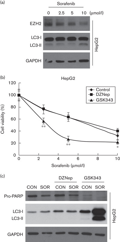 Effects of DZNep and GSK343 on the anticancer activity of sorafenib in HepG2 cells. (a) HepG2 cells were treated with 2.5–10 μmol/l sorafenib for 24 h. Whole-cell lysates were subjected to a western blot analysis using antibodies against EZH2, <t>LC3B,</t> or <t>GAPDH.</t> (b) HepG2 cells were treated with various doses of sorafenib in the absence and presence of 10 μmol/l DZNep or GSK343 for 72 h. Cell viability was analyzed using an MTT assay. * P