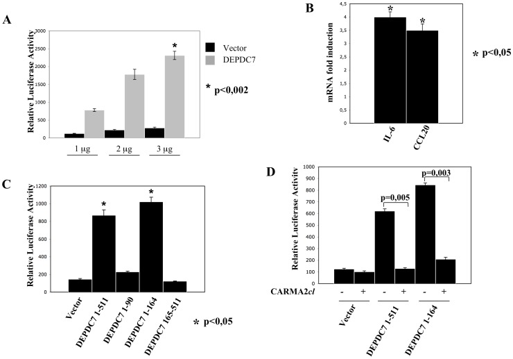 DEPDC7 activates NF-κB. A) HEK-293 cells were co-transfected with pNF-κB-luciferase plasmid, a β-galactosidase reporter vector, and the indicated amount of an expression vector encoding for the DEPDC7. 24 hrs after transfection, cell lysates were prepared, and luciferase activity was measured. Data shown represent relative luciferase activity normalized against β-galactosidase activity and are representative of at least 10 independent experiments performed in triplicate. B) Real-time PCR analysis of IL-6 and CCL20 mRNAs in cells transfected with DEPDC7. Data shown indicates normalized fold induction over mock transfectant. Statistical analysis was performed by Student's t test; a p value of